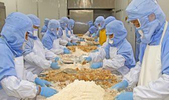 Akkordarbeiter an einer Lebensmittel-Produktionslinie