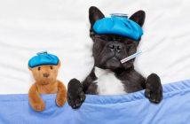 Krank im Bett liegen wegen einem schwachen Immunsystem