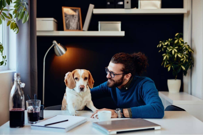 Hunde im Büro können bei der Burnout-Prävention helfen