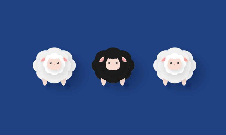 Chef als schwarzes Schaf inmitten seiner Schafsherde
